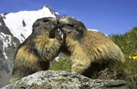 """Thế giới động vật """"yêu nhau"""" ngày Valentine - 8"""