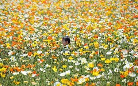 Một cậu bé chạy trong vườn hoa tại công viên Showan ở Tokyo, Nhật Bản.