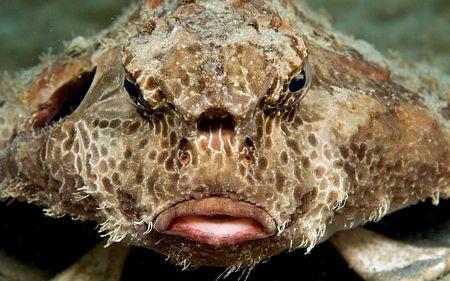 Diện mạo gớm ghiếc của một loài sinh vật biển.