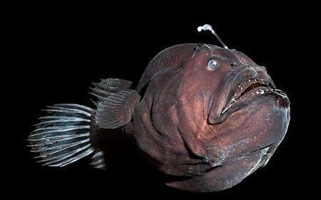 Vẻ già nua của một con cá tì bà.