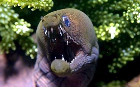 Một loài cá với bộ răng ghê sợ.