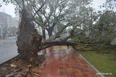 Hàng loạt cây cối đã bị bật gốc vì gió bão.