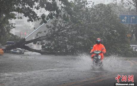 Mưa lớn gây ra do bão Haiyan đã gây ngập lụt trên diện rộng tại Hải Nam.