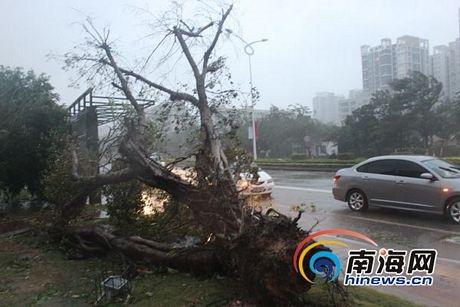 Haiyan là cơn bão thứ 30 ảnh hưởng tới Trung Quốc kể từ đầu năm nay.