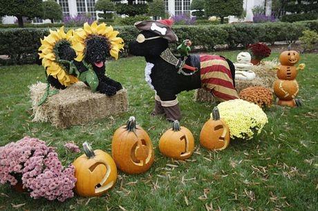 Những quả bí ngô được khoét ruột và trạm khắc để xếp thành chữ Happy Halloween.