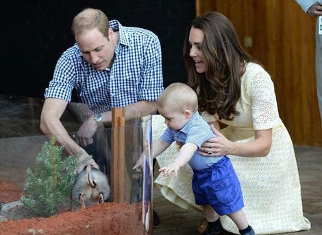 Hoàng tử George thích thú với con thú túi.