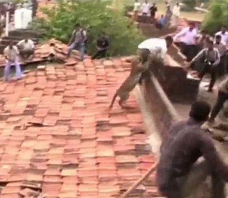 Báo hoang tấn công người dân địa phương tại Ballarpur, Maharashtra, miền tây Ấn Độ.