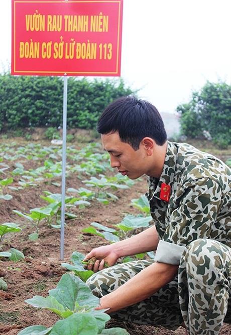 Thiếu úy Tô Anh Quang, đoàn viên Đoàn cơ sở Lữ đoàn Đặc công 113 nhổ cỏ tại vườn rau thanh niên