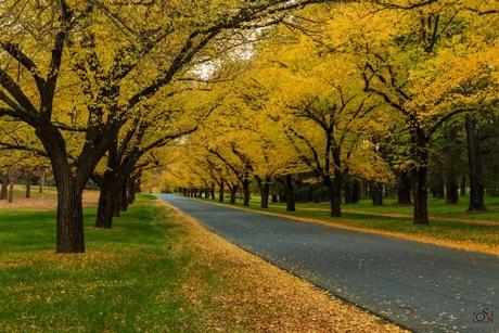 Autumn Road của tác giả Lương Ngọc Sơn.
