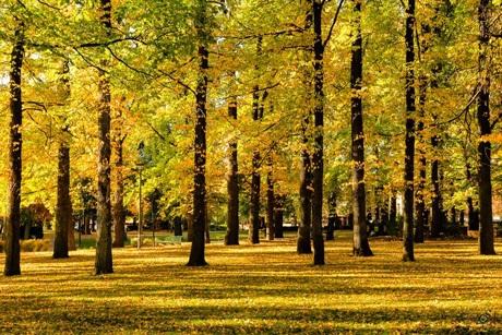 ... và The Autumn Park của Lương Ngọc Sơn.