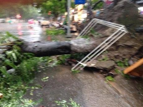 Giống như nhiều tuyến phố khác, một cây xanh khá to ở phố Bà Triệu bị bật gốc đổ ra đường...