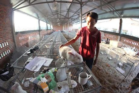 Chàng thiếu gia họ Vương đang kiểm tra và điều trị trực tiếp cho con thỏ mẹ bị bệnh.