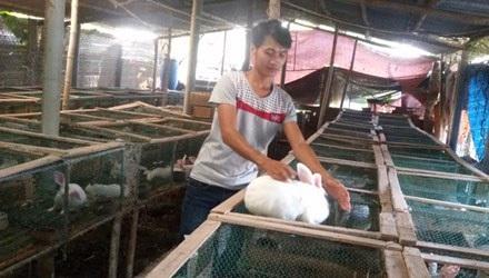 Anh Phạm Văn Thưởng chăm sóc vật nuôi trong trại nhà mình.