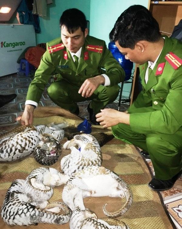 Cơ quan Công an kiểm tra các cá thể tê tê (ảnh: Công an Hà Nam)