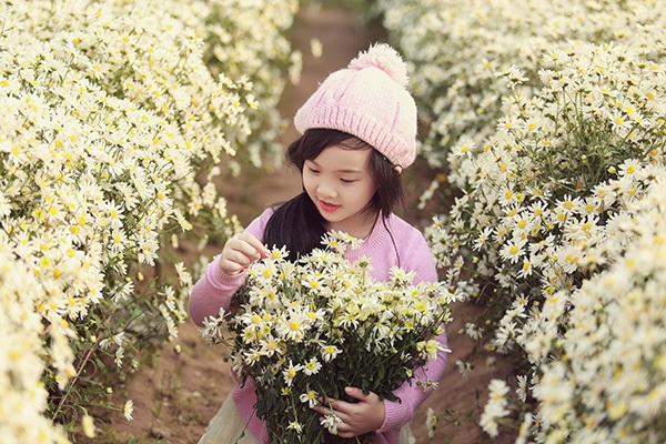 Chưa bao giờ người dân lại yêu chuộng loài hoa cúc hoạ mi như năm nay. Khắc các diễn đàn ảnh, mạng xã hội... đều thấy đăng tải những bức ảnh cúc họa mi đẹp rạng rỡ.