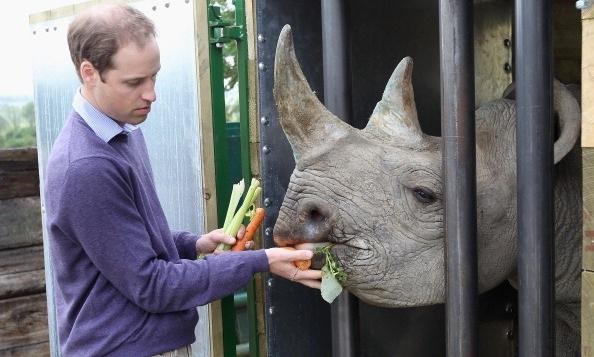 Hoàng tử William rất quan tâm tới các hoạt động bảo vệ các loài động, thực vật hoang dã (Ảnh: Getty)