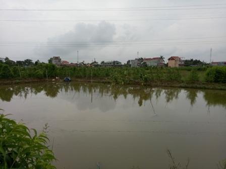 Chủ tịch xã Đặng Cương nhận định, ruộng của ông Đón đã bị đào hút khá sâu, khả năng khắc phục là rất khó.