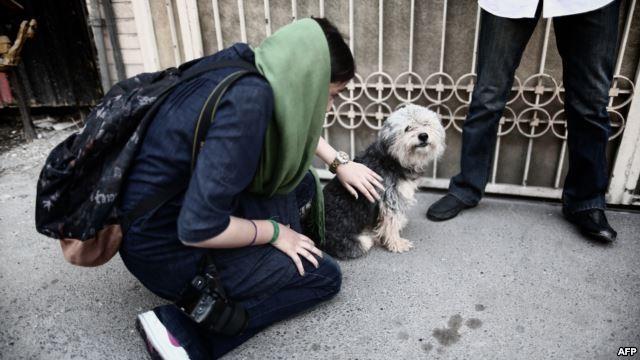 Nhốt chó trong nhà tại Iran có thể sẽ bị phạt đò