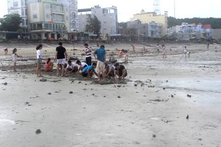 Sáng ngày 25/6, du khách đổ ra bãi biển tại khu 3 thị trấn Cô Tô để nhặt sò, ốc sau bão