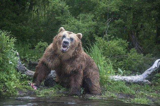 Những người tham gia vào gameshow này có thể đến từ bất cứ quốc gia nào, tỉ lệ nam - nữ được quy định ở mức 50-50. Trong những khu rừng hoang dã ở Siberia, người chơi cần biết rằng họ có thể sẽ phải đương đầu với gấu và sói. Nhiệt độ có thể sẽ xuống cực điểm -40 độ C. Hiếm có gameshow nào thử thách khắc nghiệt đến vậy.