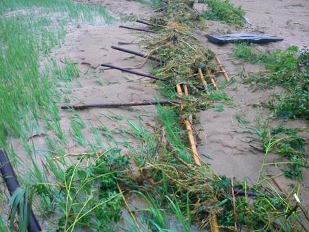 Cận cảnh mưa lũ tàn phá Con Cuông - 12