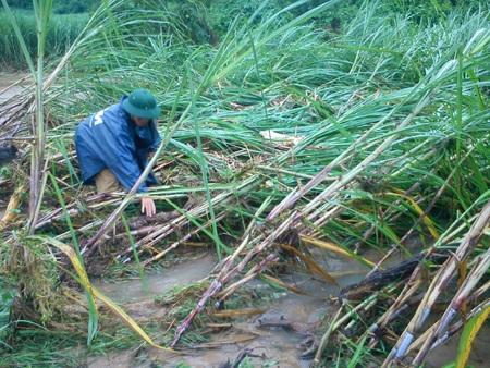 Cận cảnh mưa lũ tàn phá Con Cuông - 2