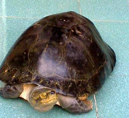 Chú rùa vẫn khỏe mạnh.