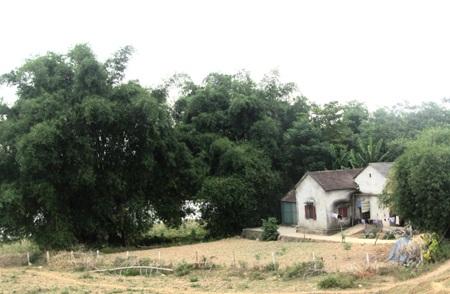 Hàng tre xanh bao bọc cả ngôi làng nhỏ