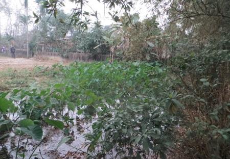 Người dân nơi đây cho biết, vũng nước lớn này nơi đây từng là kho bảo vệ thực vật từ năm 1968.