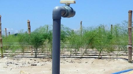 Hệ thống tưới tiêu hiện đại dẫn nước ra thẳng những khu trồng rau trên cát trắng