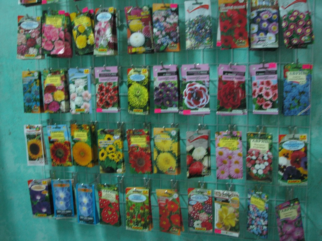 Các hạt giống hoa được Nho nhập về để bán cho khách
