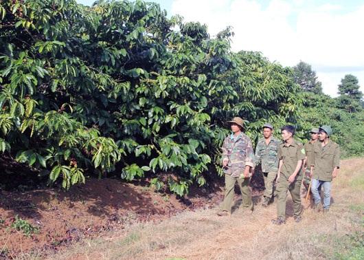 Lực lượng chức năng phối hợp với nông dân tuần tra, kiểm soát ngăn chặn nạn trộm cắp cà phê