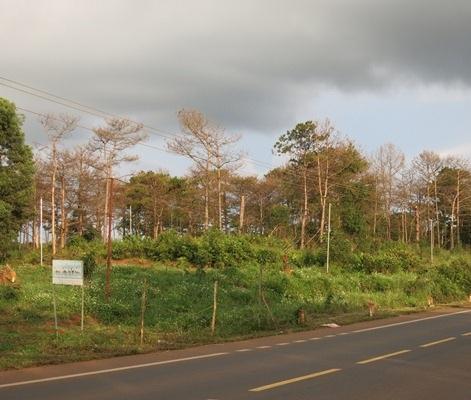 Thửa đất nằm sát quốc lộ được huyện đề xuất cấp cho vợ chồng ông Sơn