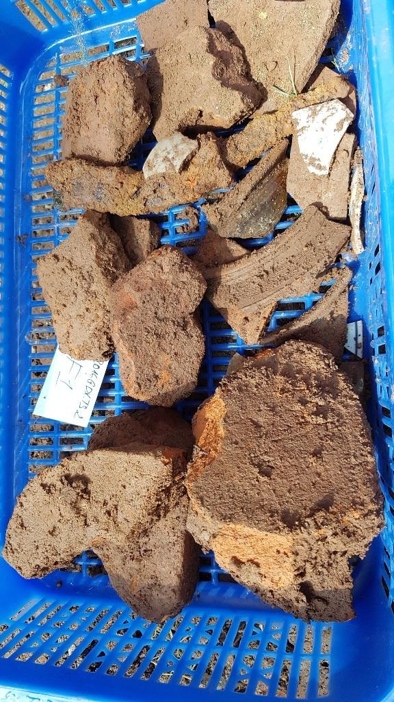 Các mẫu vật đào được trong sáng nay tại hố thứ 2 trước sân chùa Vạn Phước
