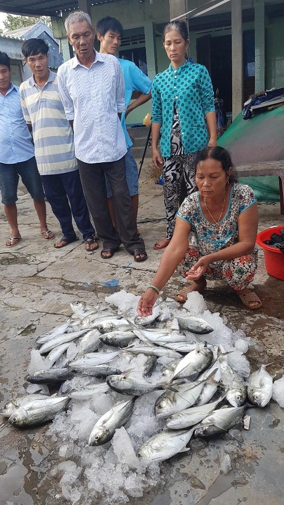 Bà Phan Thị Vân thẫn thờ bên đống cá chết.