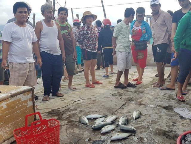 Cá lồng nước lợ chết vào đầu tháng 11 cũng tại xã Vinh Hiền, huyện Phú Lộc
