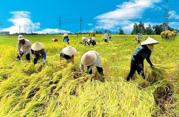 Nông nghiệp giảm tăng trưởng không phải do thiên tai mà do vấn đề nội tại của Việt Nam (ảnh minh họa)