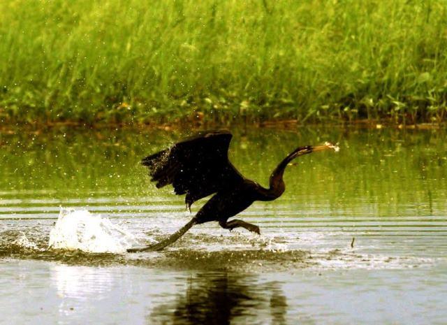 Về Tràm chim trải nghiệm những nét đặc sắc của mùa nước nổi - 4
