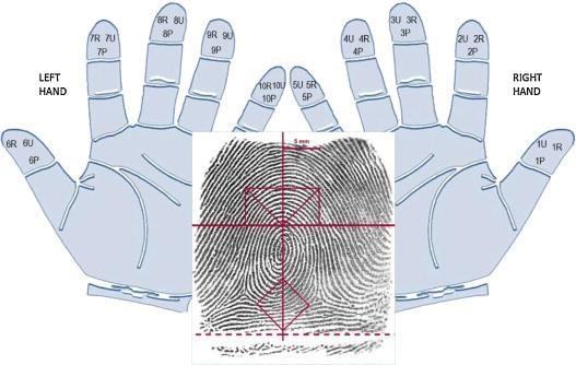 Nhiều trung tâm cho biết, khoa học về sinh trắc vân tay đã được nghiên cứu từ lâu trên thế giới.