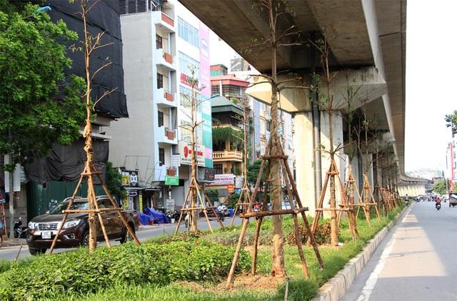 Những ngày gần đây hàng loạt cây xanh được trồng dưới gầm tuyến đường sắt Cát Linh – Hà Đông, khiến nhiều người băn khoăn. Ông Vũ Kiên Trung – Tổng Giám đốc Công ty TNHH MTV Công viên cây xanh Hà Nội cho biết, sẽ khống chế chiều cao cây xanh, nên ngọn cây sẽ không ảnh hưởng đến đường sắt trên cao.