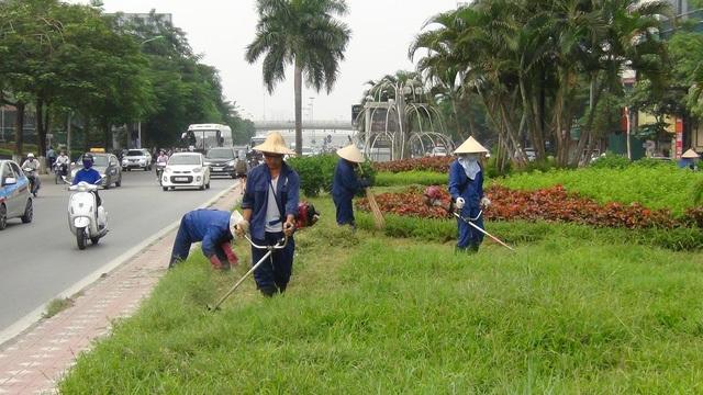 Sau 3 tháng tạm dừng việc cắt tỉa cỏ trên các tuyến phố lớn ở Thủ đô, vài ngày trở lại đây, hàng chục công nhân lại được huy động đi cắt dọn cỏ dại - có nơi đã cao ngập đầu người. (Ảnh Quang Phong)