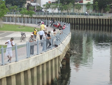 Nhiều cần thủ buông câu trên kênh Nhiêu Lộc - Thị Nghè để tận diệt đàn cá đang hồi sinh