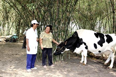Hệ thống vắt sữa tự động hiện đại tại Trang trại bò sữa của Vinamilk