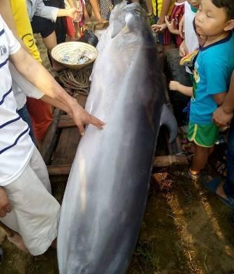 Xác cá voi được phát hiện trôi dạt vào bờ biển.