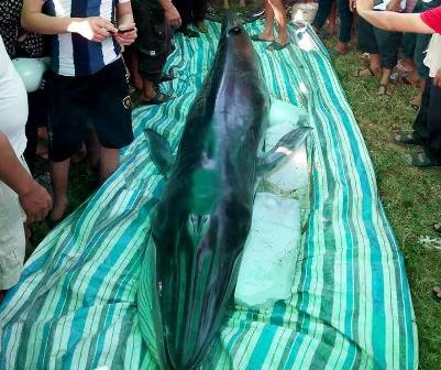 Rất đông người dân địa phương đến xem xác cá.