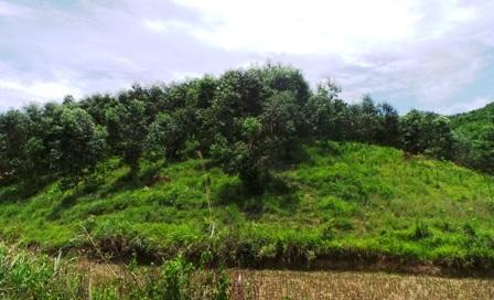 Khu đất gia đình chị Thắm được cấp quyền sử dụng nhưng đang bị lấn chiếm.