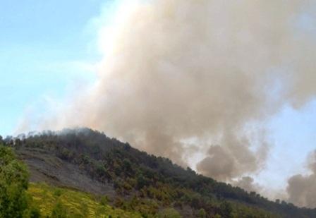 Thời tiết nắng nóng là một trong những nguyên nhân dẫn đến tình trạng cháy rừng.