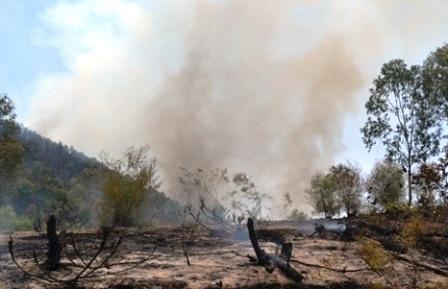 Hàng chục ha rừng trên địa bàn xã Triệu Lộc đã bị thiêu rụi.