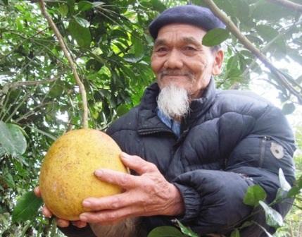 Ông Nguyễn Văn Khảm, người trồng và lưu giữ giống bưởi đỏ tiến vua ở Thọ Xuân, Thanh Hóa.
