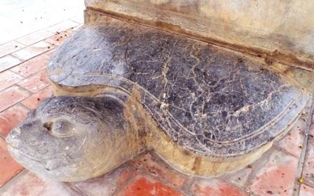 Rùa đá tại bia Quang thục Hoàng thái hậu Ngô Thị Ngọc Giao.